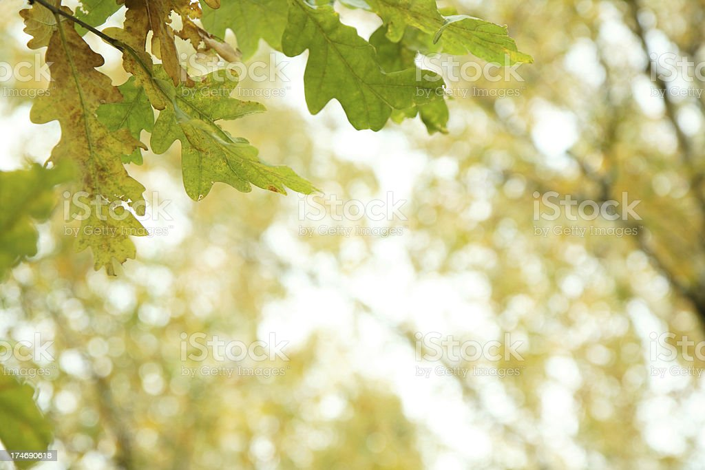 beginning of autumn royalty-free stock photo