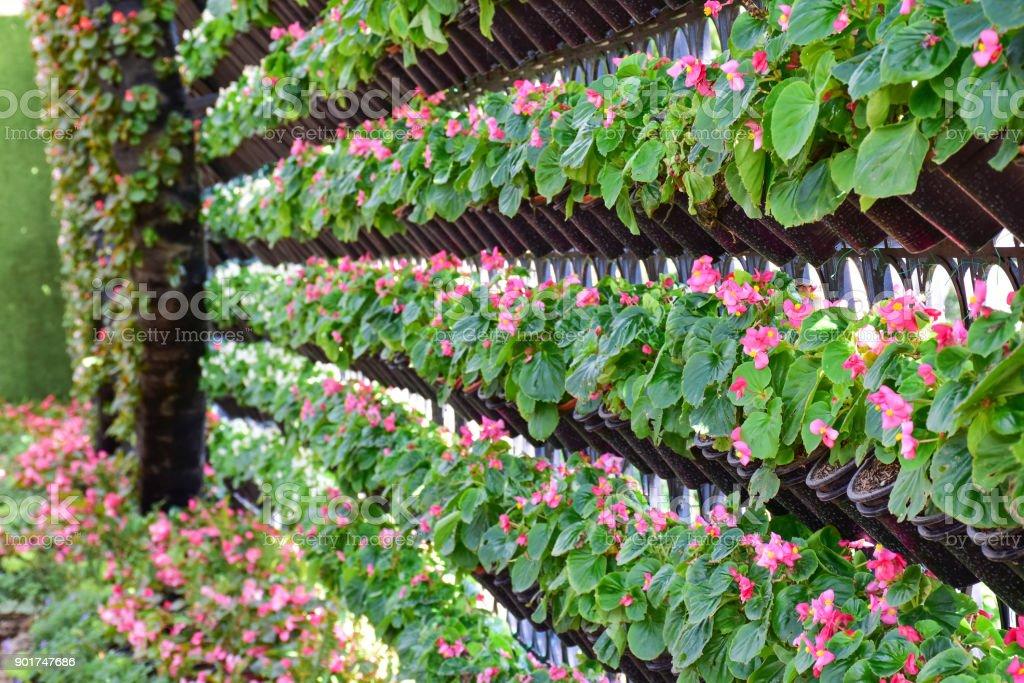 Begonia Garden Farm Stock Photo Download Image Now Istock