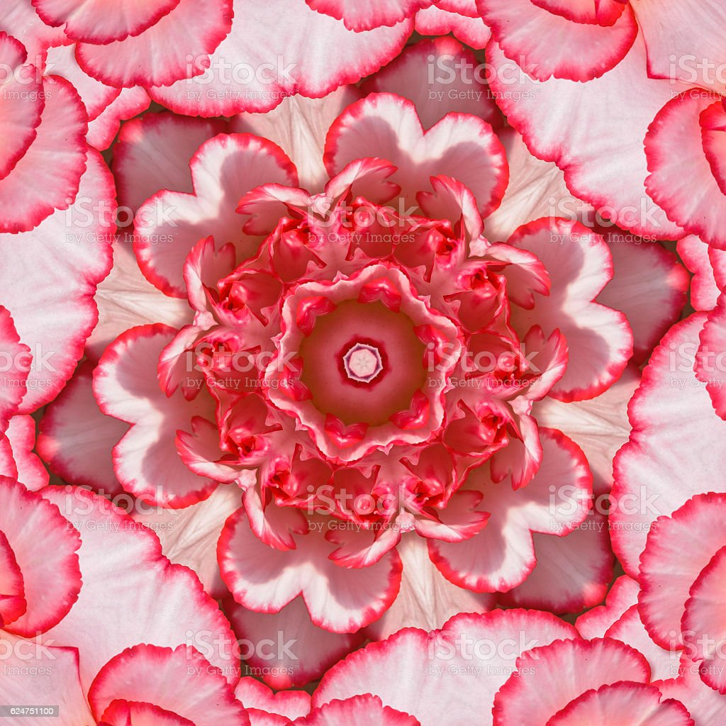 Begonia Petal Mandala stock photo