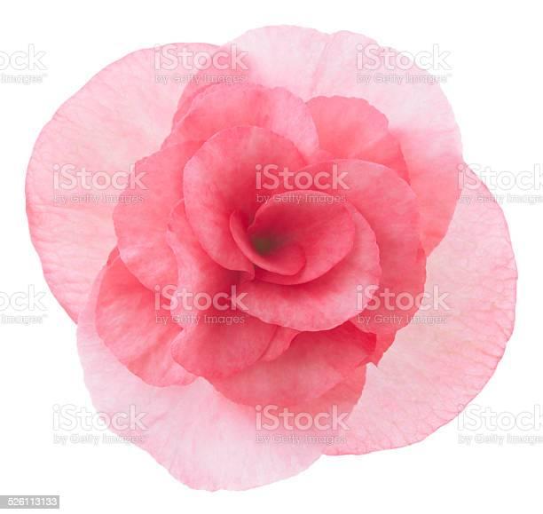 Begonia picture id526113133?b=1&k=6&m=526113133&s=612x612&h=vdjrjrv4alge1eqpsi jkpxwjbqb5ic0emtaj ojwle=