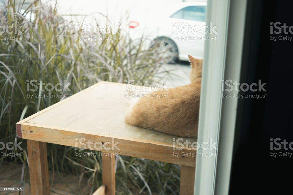 Behind scene of chilling cat sitting in front of home and stay alerted stock photo