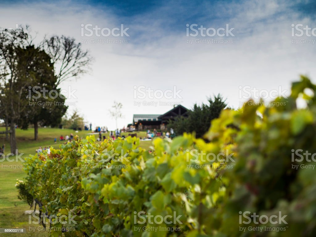 Behind the Vines stock photo