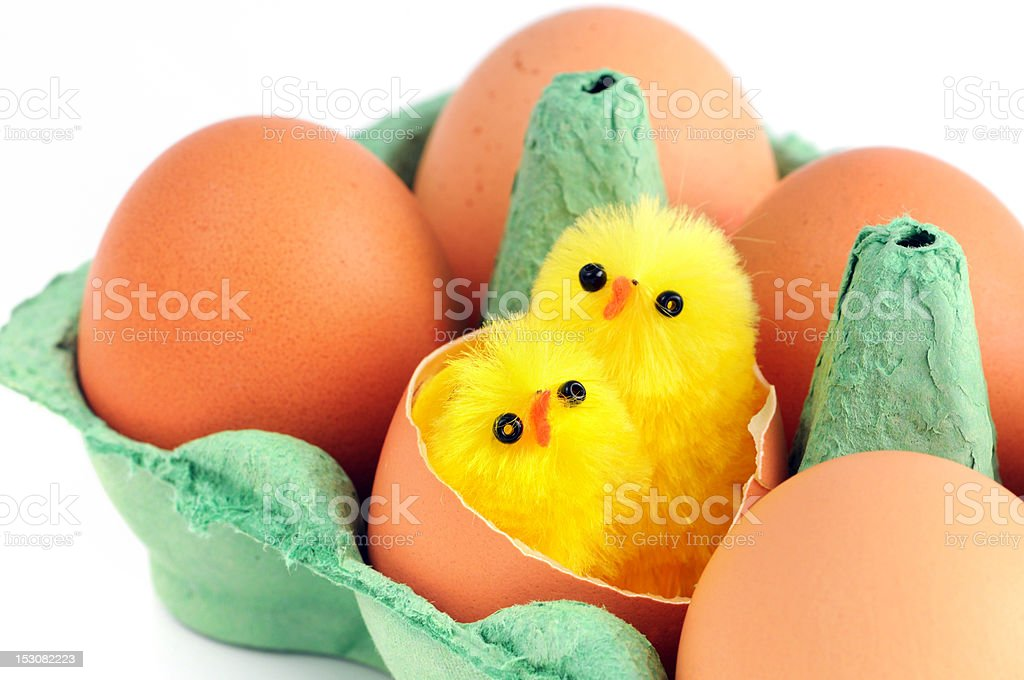 beige eggs with two young chicken in green carton royalty-free stock photo