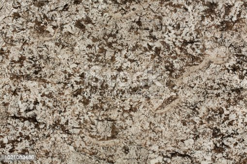 1024637226 istock photo Beige granite, abstract background close up photo 1021083486