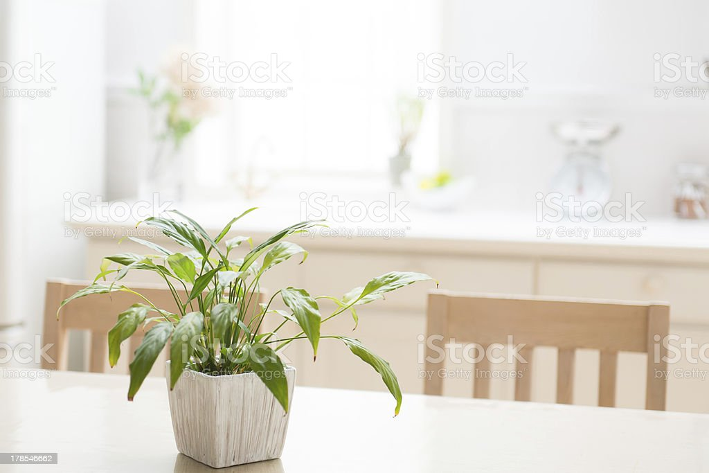 Beige home kitchen table with plant centerpiece stock photo