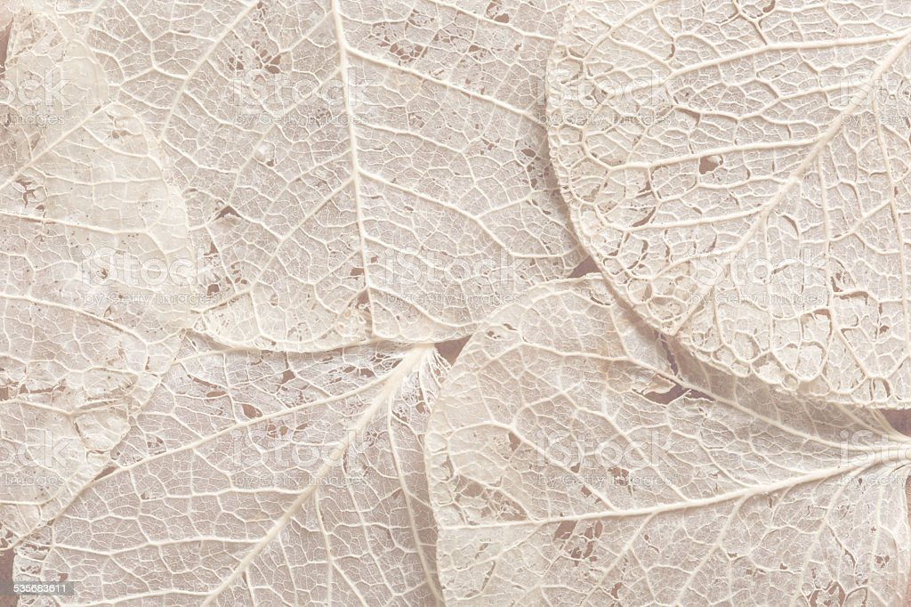 Beige leaves textured background stock photo