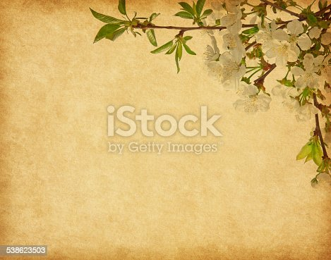 istock Beige paper  with cherry blossom. 538623503
