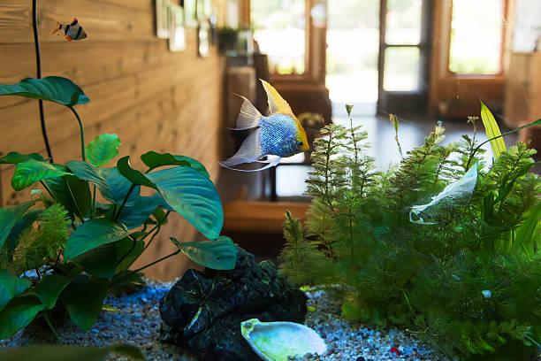 beijing ao lunda tribe villa - home aquarium stock pictures, royalty-free photos & images