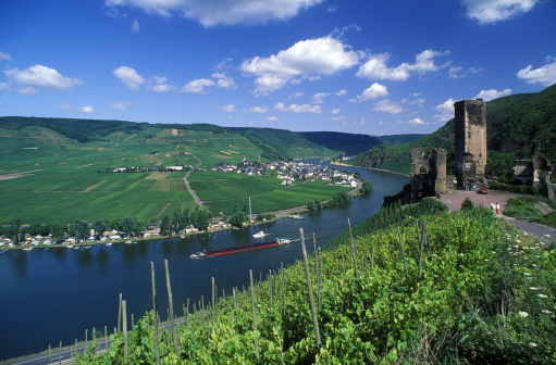 Beilstein Castle on Mosel River. Green Vineyard Foreground.