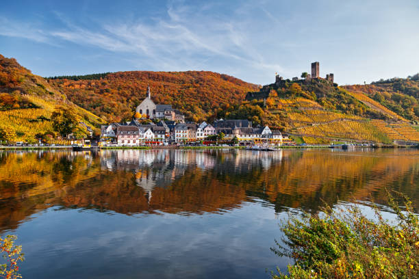 Beilstein resort town and Vineyards in Mosel wine valley at autumn Mosel valley vineyards, Germany. grand est stock pictures, royalty-free photos & images