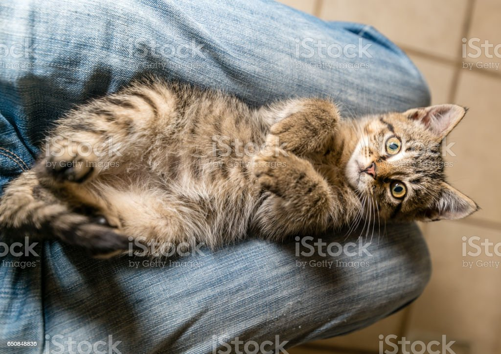 Being cute stock photo