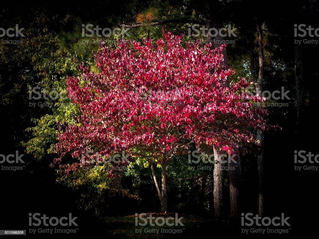 Bejeweled Tree stock photo