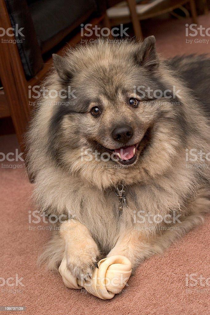 Beko the smiling dutchman royalty-free stock photo