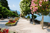 Belaggio, Italy- Colorful blossoming trees along the promenade in public park