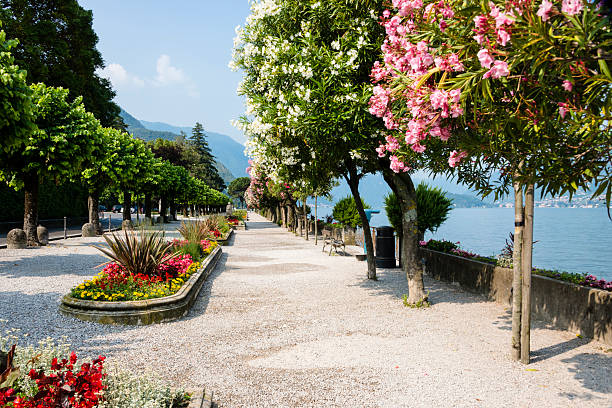 belaggio, italy- colorful trees along promenade in public park-xxxl - como italië stockfoto's en -beelden
