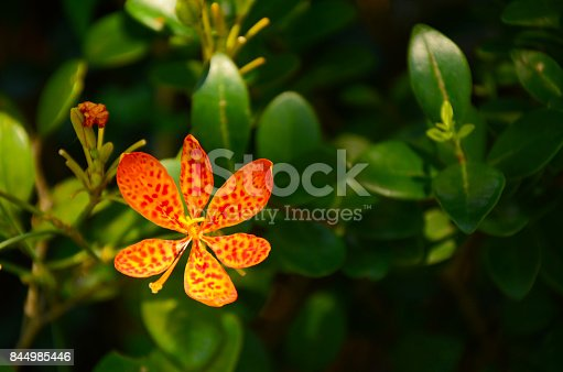 nature, orange, park, plant, red, summer, yellow