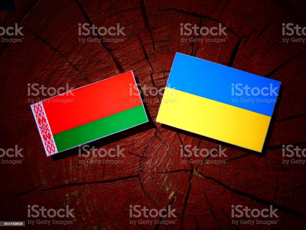 Belarus flag with Ukrainian flag on a tree stump isolated stock photo