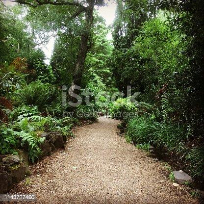 woodland in Belfast Botanic Gardens