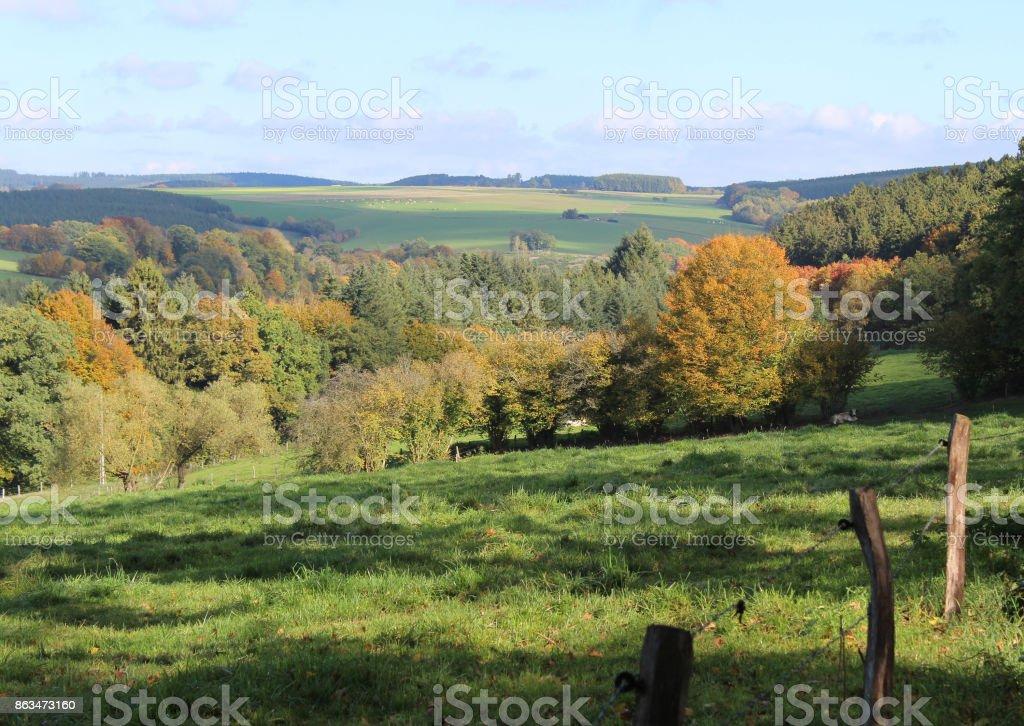Belge Ardenne - Photo