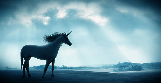 believe the unbelievable - unicorns stock photos and pictures