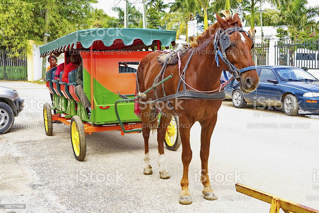 Belize City Tourist Filled Horse and Carriage stock photo
