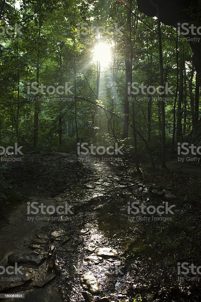 Bell Smith Springs Lighted Path stock photo