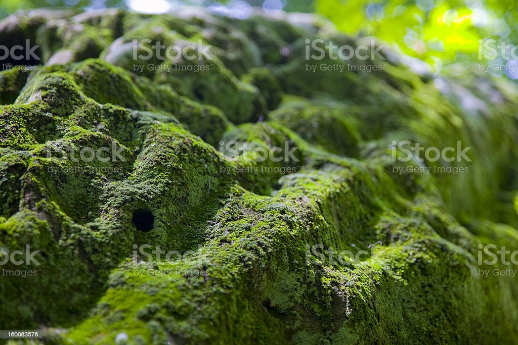 Bell Smith Springs Mossy Rock stock photo