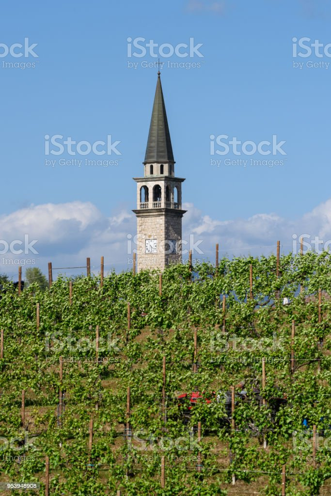 Image result for tower in a vineyard