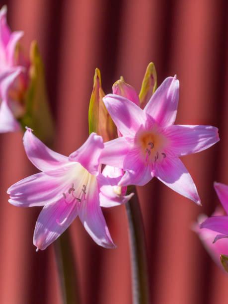 Lady Wild Flower  nackt