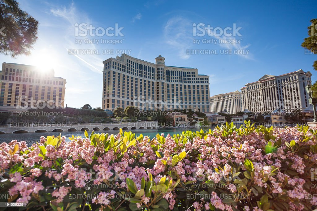 Bellagio Hotel pond and flowers stock photo