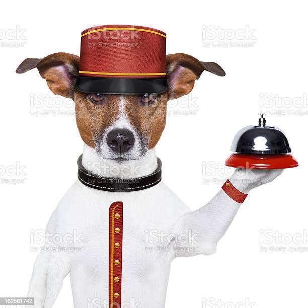Bellboy dog picture id162561742?b=1&k=6&m=162561742&s=612x612&h= irzni7xxaqiqprcrorg7woaf7jtppwvqjtfzimx9w8=