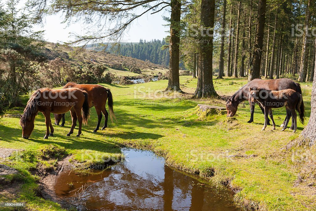 Bellever Dartmoor Devon stock photo