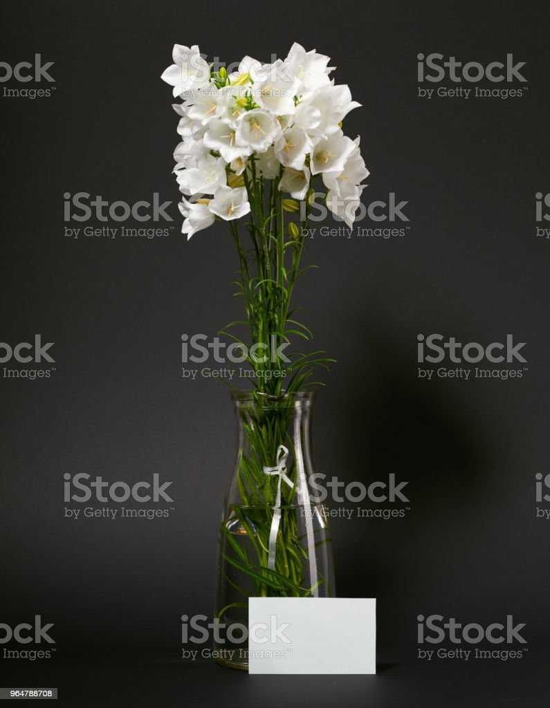 bellflower in a vase on black background royalty-free stock photo