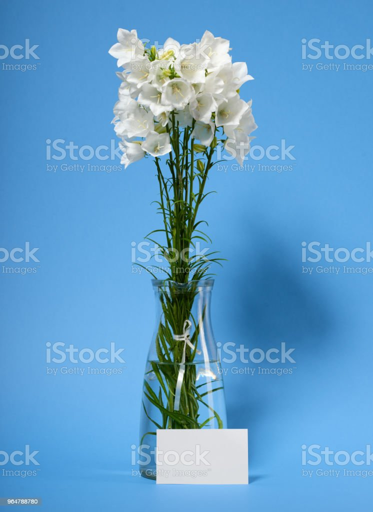 bellflower in a vase on cyan background royalty-free stock photo