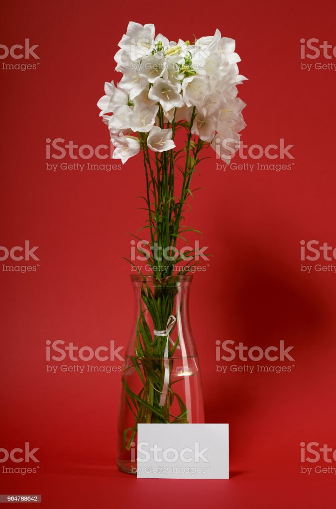 bellflower in a vase on red background royalty-free stock photo