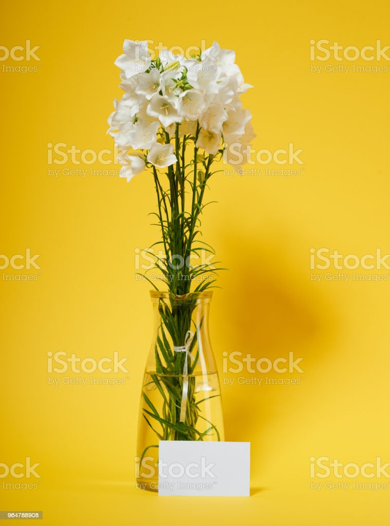 bellflower in a vase on yellow background royalty-free stock photo