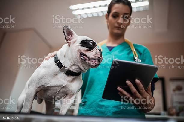 Below view of a bulldog on medical exam at vets picture id501644266?b=1&k=6&m=501644266&s=612x612&h=vw8thk9eiyqqm ic004c1aq fqmjfe4vc2buxmjeku4=