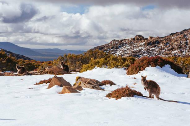 Ben Lomond Ski Resort Tasmania Australia stock photo