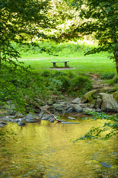 Bench along the river in Tarr Steps Woodland stock photo