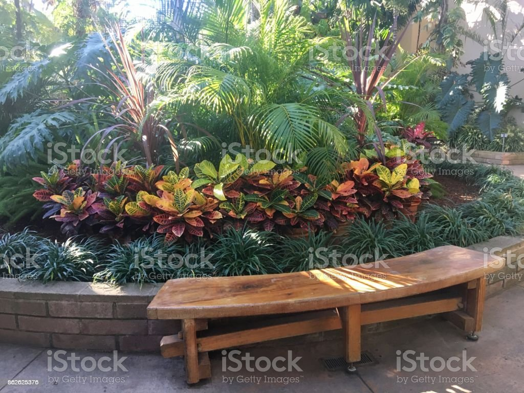 Bench amongst the Foliage stock photo