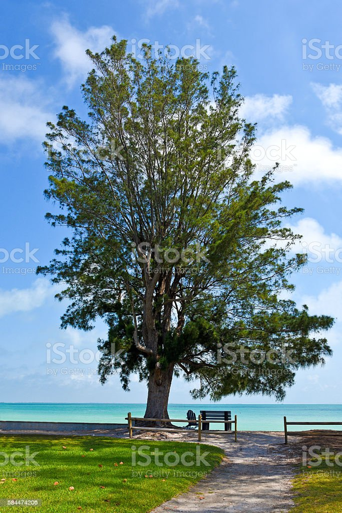 Bench and Chair under a Tree on the Beach stock photo