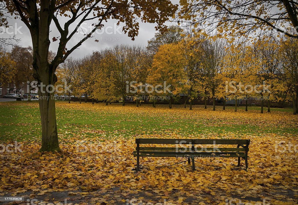 bench autum leaves royalty-free stock photo
