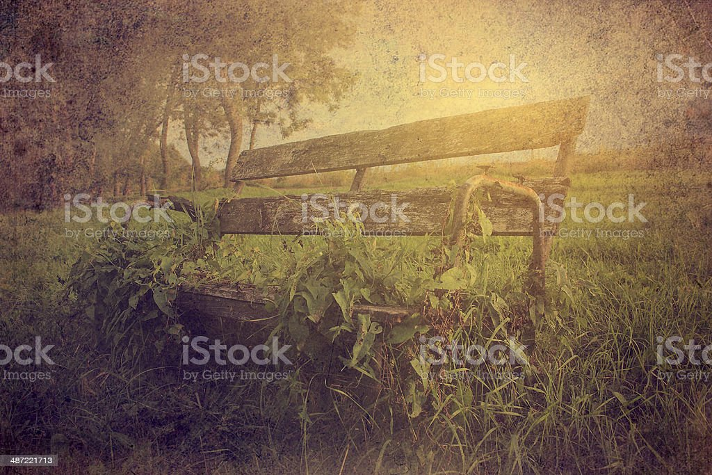 Bench covered by ivy stock photo