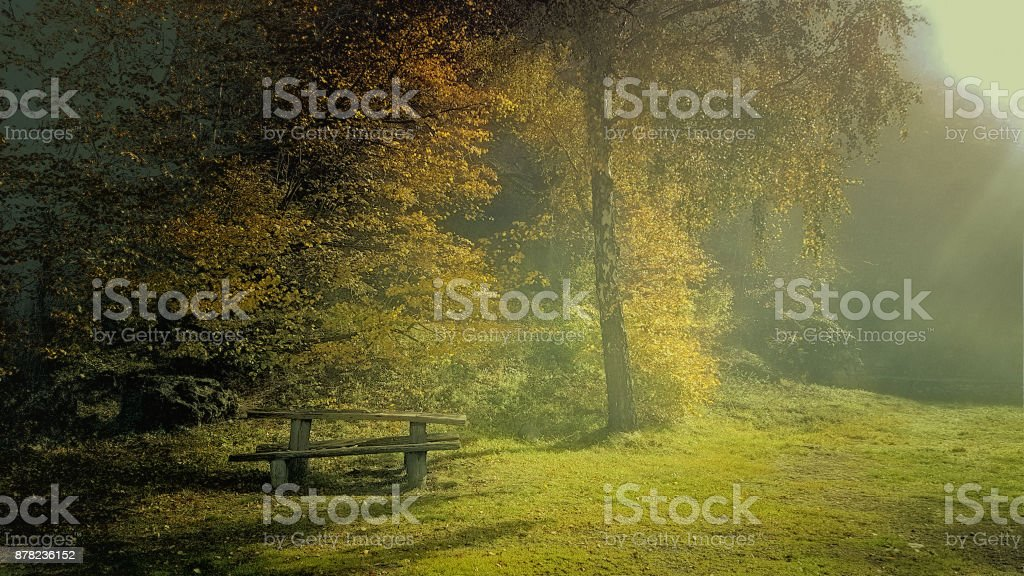 A bench in a forest stock photo