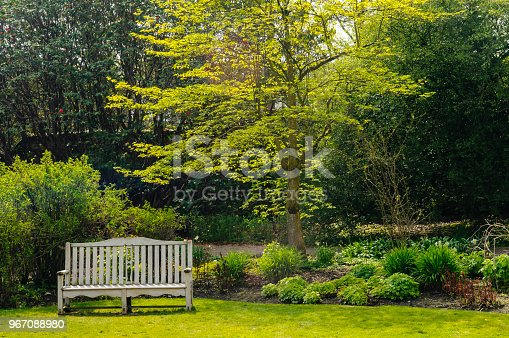 Bench in a large garden