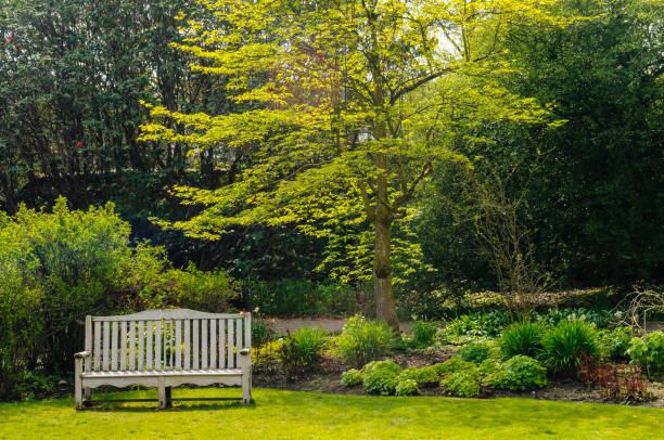 bänk i en stor trädgård - bench bildbanksfoton och bilder