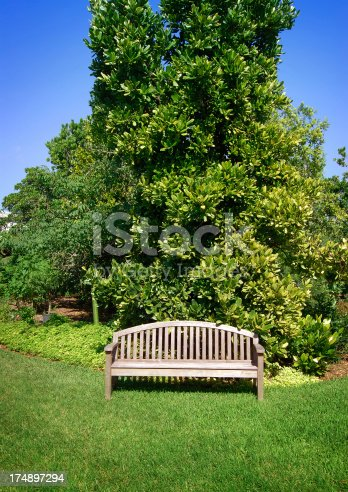 wooden empty bench in a miami tropical public park