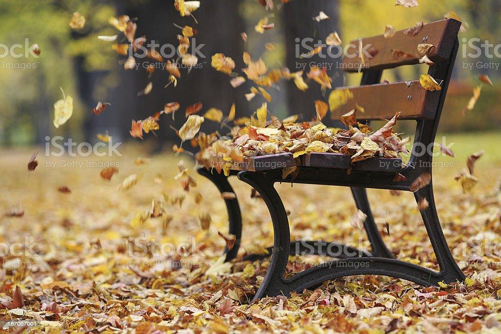 Bench in autumn park foto