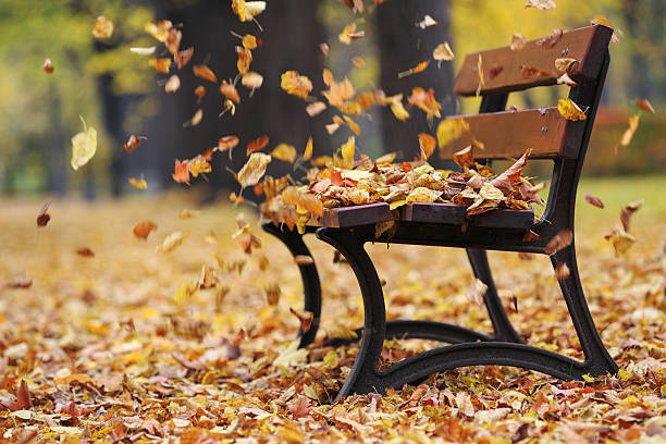 bench in autumn park - blowing stock photos and pictures
