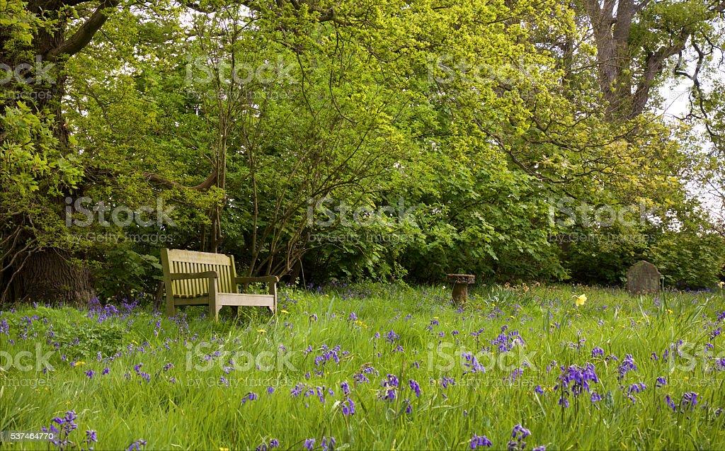 Bench in bluebell field – Foto